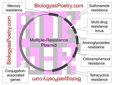 Resistance plasmid