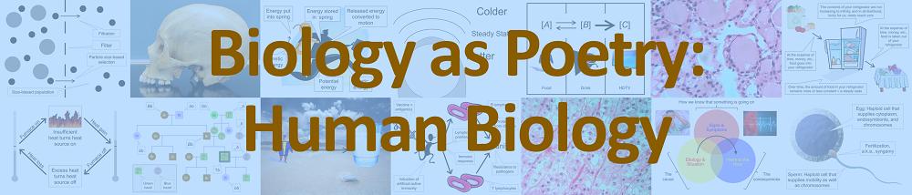Biology as Poetry: Human Biology