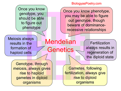 mendelian genetics Who was gregor mendel plan your 60 minutes lesson in science or genetics with helpful tips from mariana garcia serrato.