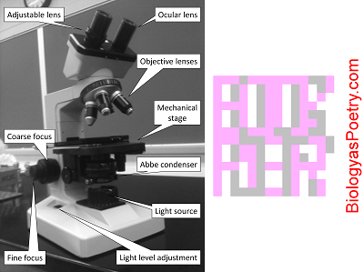 Olympus Microscopy Resource Center | Anatomy of a Microscope