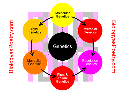 a study of genetic construction Oncological and genetic factors impacting pdx model construction with nsg  mice  this study evaluated influencing factors, including clinical,.