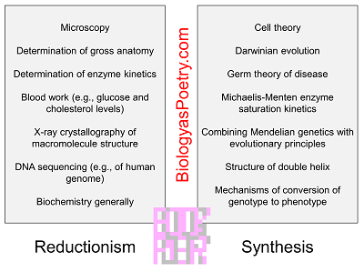 Reductionism/Synthesis